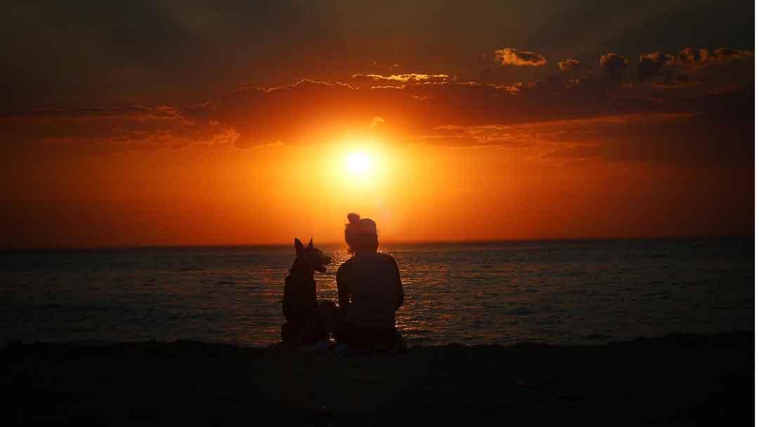 phone-sunset-photo-pet